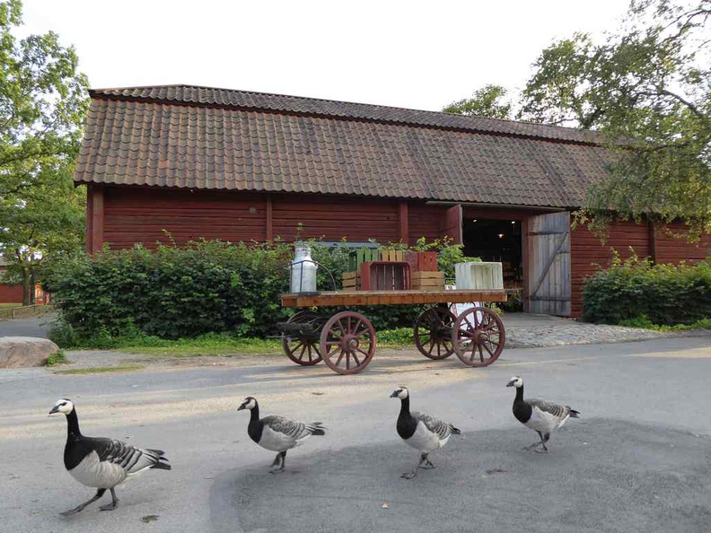 An uncommon sight here at Skansen open air museum, which makes it uniquely quirky and fascinating at the same time