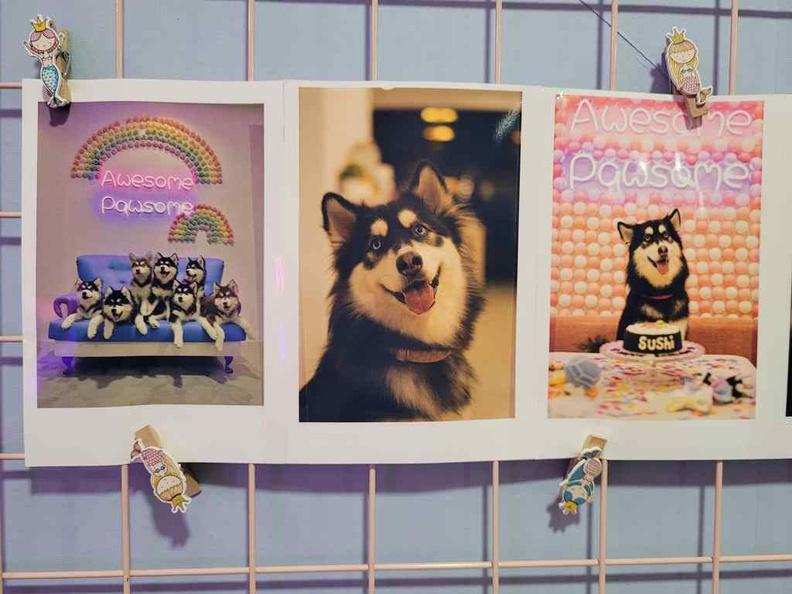 Wooftopia Pet Cafe is a pet cafe which sure puts your pooch feel like at home