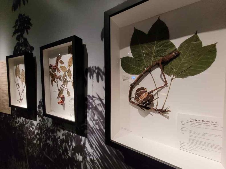 Plantation specimens and seeds