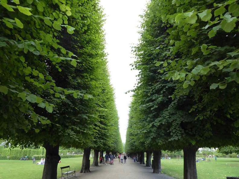 Copenhagen Denmark Castle King's Garden, with rows of manicured trees in the botanical public garden