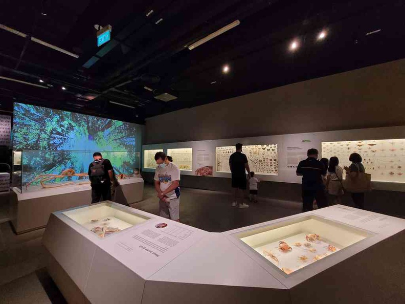 Welcome to the Exhibition floor of the Lee Kong Chian Natural History Museum at NUS