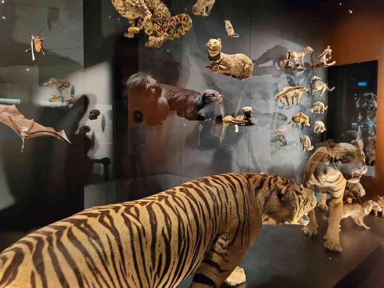 Lee Kong Chian Natural History Museum displays behind glass in this mammal collection