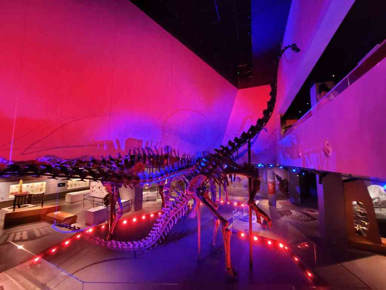 Three diplodocid sauropod Dinosaurs fossils takes center stage here in the museum