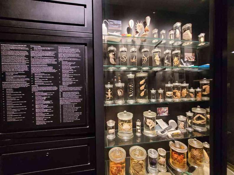Display cabinets Raffles Natural History Collection Lee Kong Chian Natural History Museum