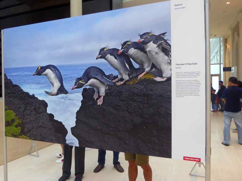 Nature 2nd Prize covering Crested penguins