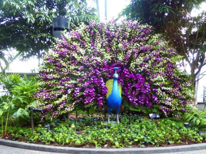 A peacock flower sculpture in the topiaries park