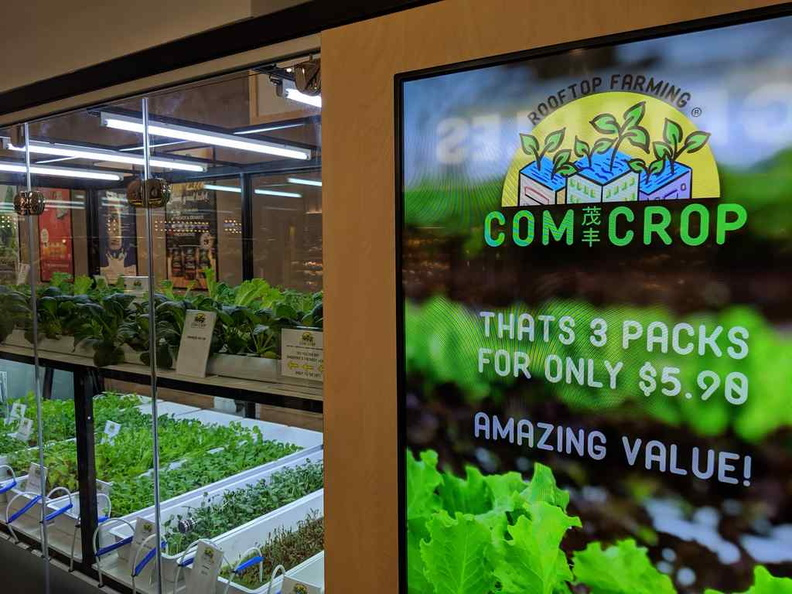 Com Crop hydroponics farming live display
