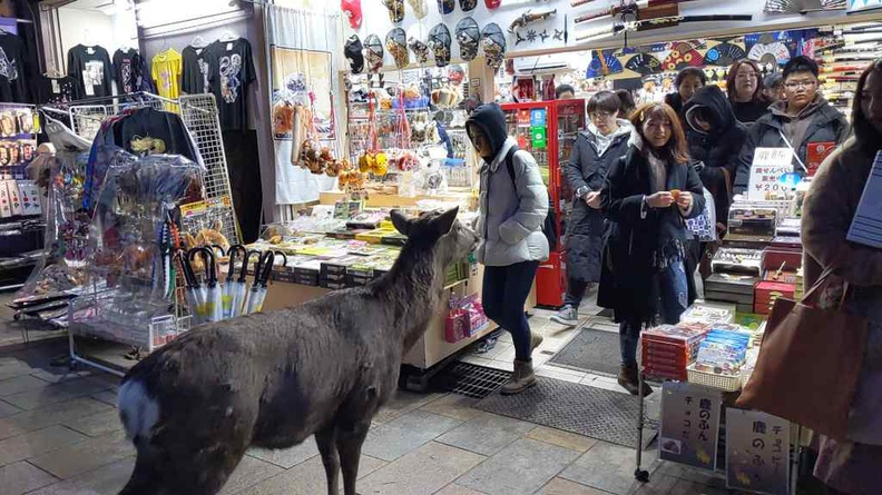 Deer at a shop. Even deers know where their food sources come from