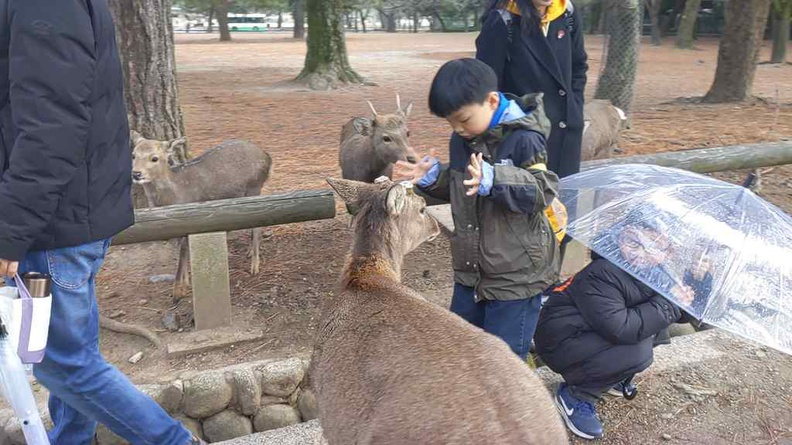 Show your palms to the deer like this boy and deers will stop swarming you
