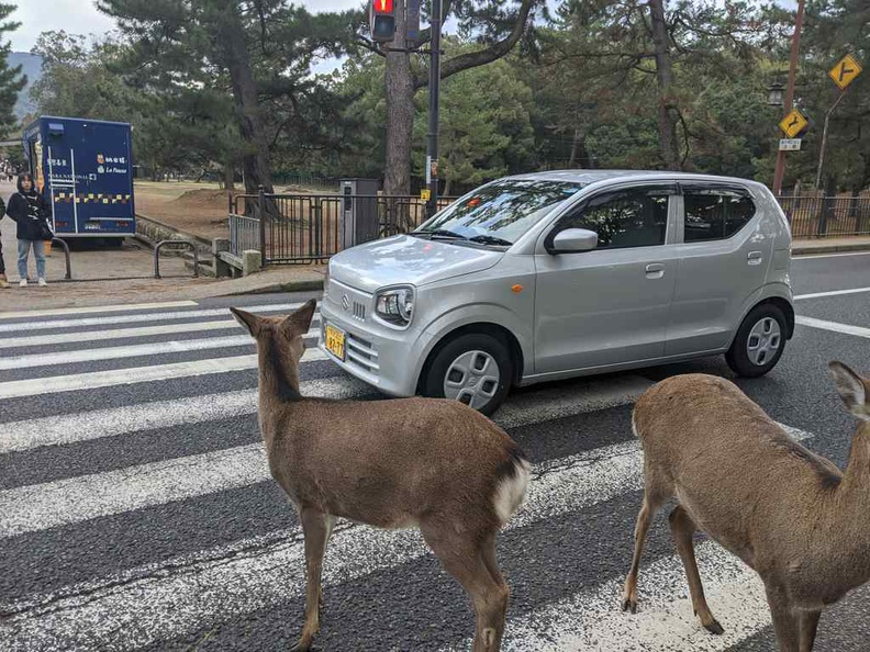 Deers have the right of way here at Nara park Japan